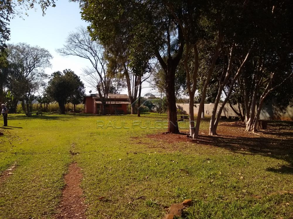 Comprar Terreno / Área em Londrina apenas R$ 1.200.000,00 - Foto 5