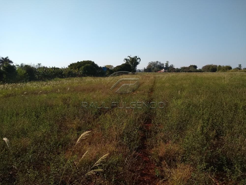 Comprar Rural / Chácara em Londrina apenas R$ 2.000.000,00 - Foto 2